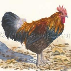 King of the Barnyard by Lynnea Mattson Gallery