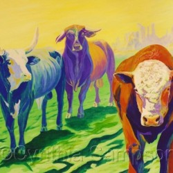 The Good, The Bad & The Ugly   (rodeo bulls) by Cynthia Sampson