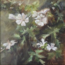 White Mallow by Karen Ryan Fine Art