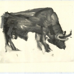 Bull by Pat Taylor Fine Art
