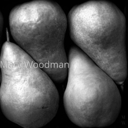 Sextet by Mary Woodman | Photography