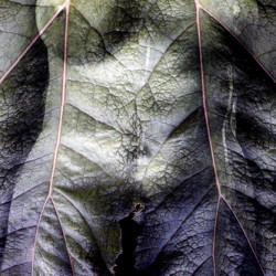 Torso/Leaf by Mary Woodman | Photography