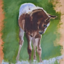 Appaloosa Baby by Ginny Getts Fine Art