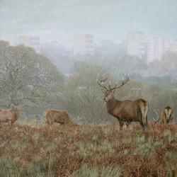 Winter in Richmond Park by Nessie Ramm