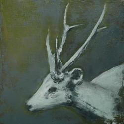 untitled stag by Kim Kimbro