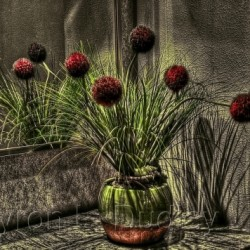 Still Life at the Reiner's (B) by Byron Dudley Photography