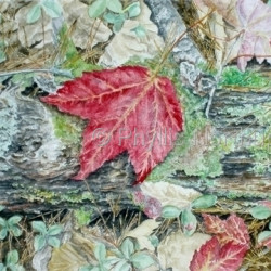 Forest Floor by Phyllis Northup