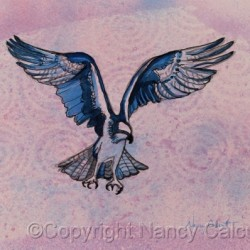 Osprey in Flight by Nancy Calcutt