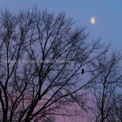 Time of Solitude... Under a Pandemic Moon by Jeanette S. Robison Artistic Studios