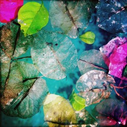 Petals on the Pool, with Green Leaves by Maura Brennan