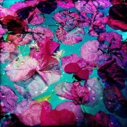 Petals on the Pool, with Water Droplets, Study 1 by Maura Brennan