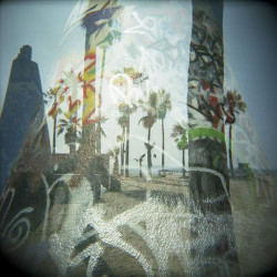 Graffiti Palms by Maura Brennan