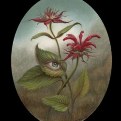Bee Balm by Jennifer Knaus