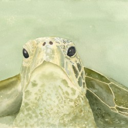 Turtle in Emerald Waters 6 by Marie Maurgo Cohorn Art