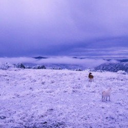 Scottish Moor in Winter with Canines by  Arthur Van Kaseman