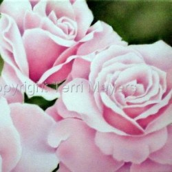 Pale Pink Roses by Terri Meyers