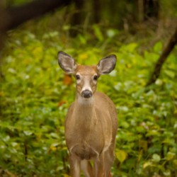 Button Buck  by B.a.d. Images Photography