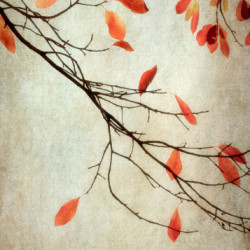 Red Leaves  by Dianne Poinski