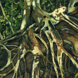 Strangler Fig Roots by Kristin Gjerdset