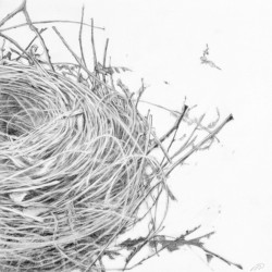 Empty Nest #1 by Patricia  Dorr Parker