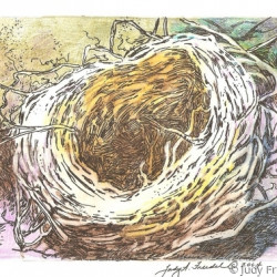 Bird's Nest by Judy Freidel