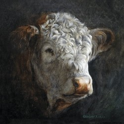 Polled Hereford by Gregory Karas