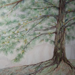 Pine Tree, Enchanted Forest by Joy Hartsfield
