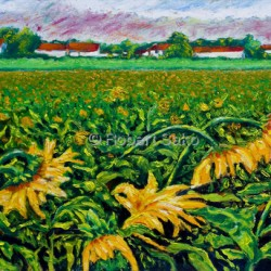 Sunflower Farm by Robert Sako