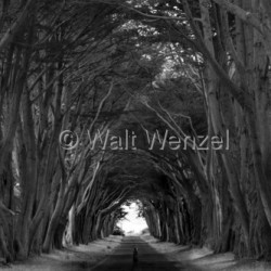 Contemporary art by Walt Wenzel Photography
