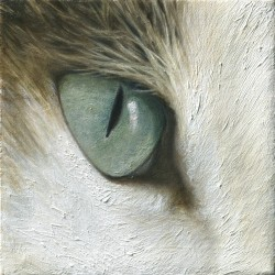 Cat's Eye by Aixa Oliveras
