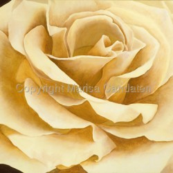 yellow rose of Texas by Marisa Candaten