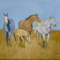Four wild horses by Virginia Cantarella