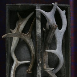 Box of Antlers by Laurinda Stockwell