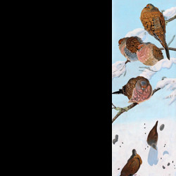 Mourning Doves by Peggy Clark Lumpkins