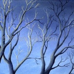 Highlit Branches, Maryland by Kesra Hoffman
