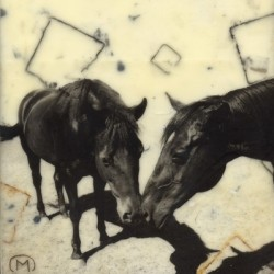 Equus 2 by Mary Calkins Art