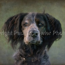 Frank by Pauline Fowler Photography