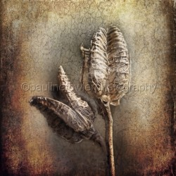 Dried seedheads by Pauline Fowler Photography