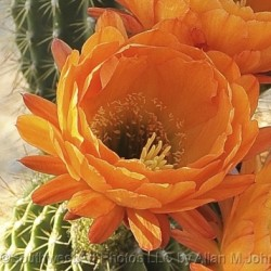 Orange Beauty by Southwest Art Photos, Llc By Allan M Johnson