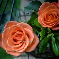 Sweet Orange Roses by The Artistry House