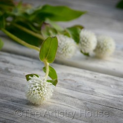 Pretty Little White Flowers by The Artistry House