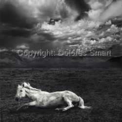 White Horse, Storm Clouds, Colorado by Dolores Smart