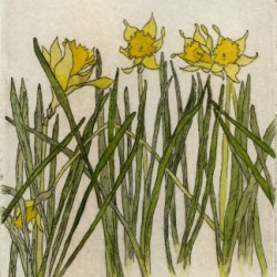 Daffodil Dream by Andrea Wilson Artist