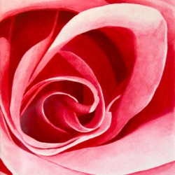 Pink Rose by Robert Abriola