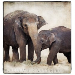 Elephants III by Van Swearingen Photography