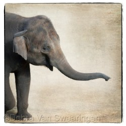 Elephants II by Van Swearingen Photography
