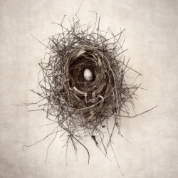 Nest I by Van Swearingen Photography